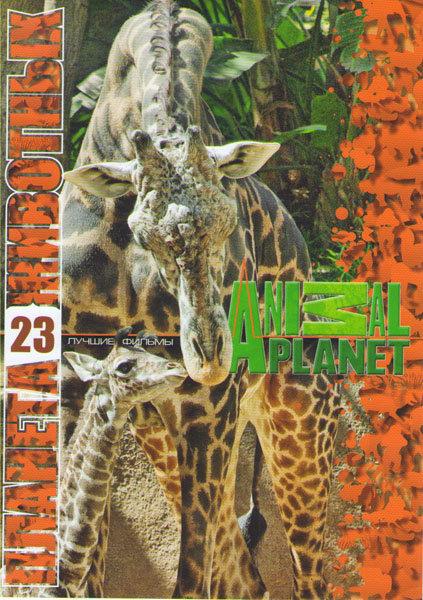 Планета животных 23 (Самые забавные животные планеты (17 серий) / Заповедник в дебрях Африки (14 серий) / Живая планета (2 серии)) на DVD