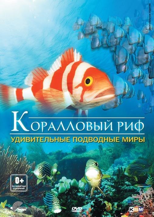 Коралловый риф удивительные подводные миры
