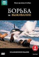BBC Борьба за выживание (12 серий) (4 DVD) на DVD