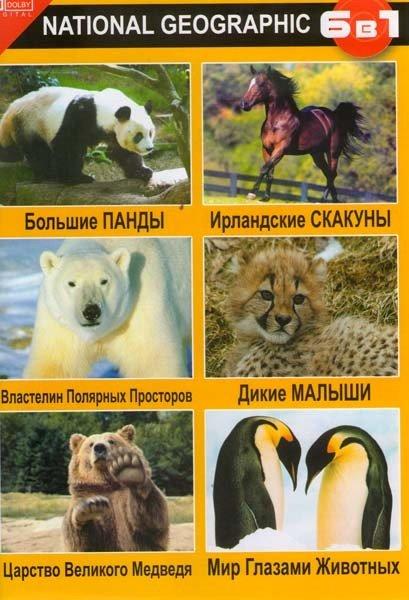 Большие панды / Властелин полярных просторов / Царство великого медведя / Ирландские скакуны / Дикие малыши / Мир глазами животных на DVD
