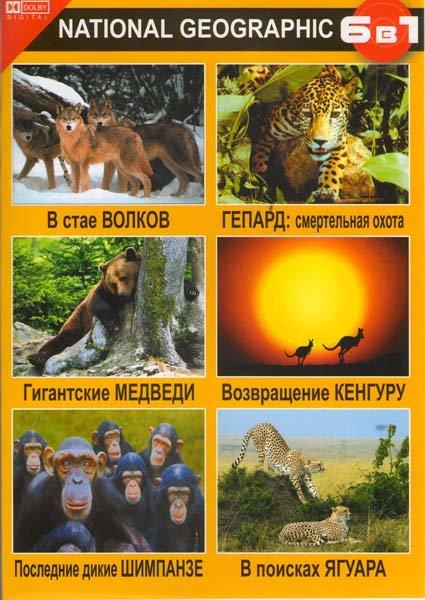 В стае волков / Гигантские медведи / Последние дикие шимпанзе / Геппард смертельная охота / Вовращение кенгуру / В поисках ягуара на DVD