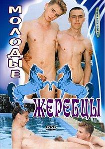 Молодые Жеребцы на DVD