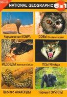 Королевская кобра / Медоеды змеиные убийцы / Царство анаконды / Совы ночные охотники / Псы-убийцы / Горные гориллы