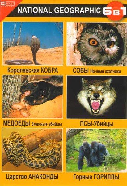Королевская кобра / Медоеды змеиные убийцы / Царство анаконды / Совы ночные охотники / Псы-убийцы / Горные гориллы на DVD
